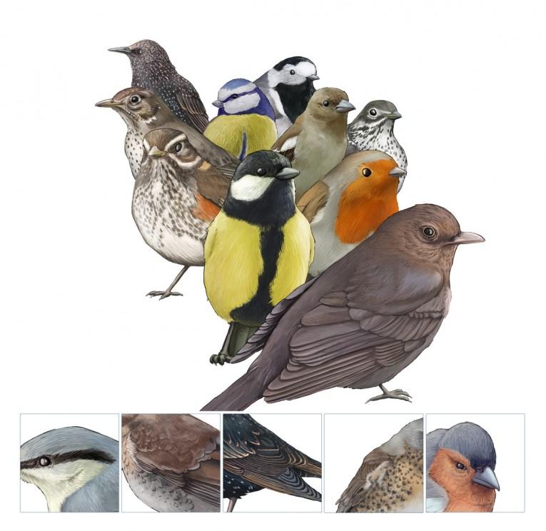 Fugler, presentasjon